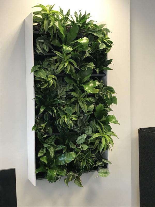 photo - Jaco interieurbeplanting